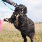 Лапка собака из приюта на пристройство, частный приют для бездомных животных Зов Предков zovpredkov.net фото 3