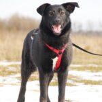 Черри собака из приюта на пристройство, частный приют для бездомных животных Зов Предков zovpredkov.net фото 6