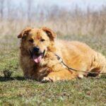 Флинт собака из приюта на пристройство, частный приют для бездомных животных Зов Предков zovpredkov.net фото 6