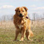 Флинт собака из приюта на пристройство, частный приют для бездомных животных Зов Предков zovpredkov.net фото 5