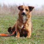 Кэнди собака из приюта на пристройство, частный приют для бездомных животных Зов Предков zovpredkov.net фото 6