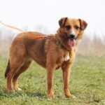 Кэнди собака из приюта на пристройство, частный приют для бездомных животных Зов Предков zovpredkov.net фото 4