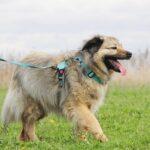 Тая собака из приюта на пристройство, частный приют для бездомных животных Зов Предков zovpredkov.net фото 4
