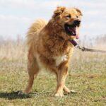 Флинт собака из приюта на пристройство, частный приют для бездомных животных Зов Предков zovpredkov.net фото 2