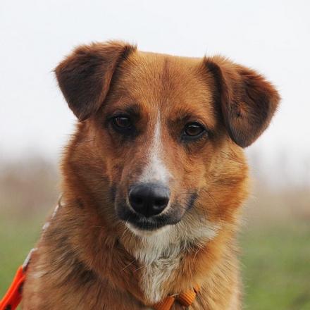 Кэнди собака из приюта на пристройство. частный приют для бездомных животных Зов Предков zovpredkov.net