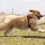 Ирвин собака из приюта на пристройство, частный приют для бездомных животных Зов Предков zovpredkov.net фото 2