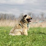 Тая собака из приюта на пристройство, частный приют для бездомных животных Зов Предков zovpredkov.net фото 3