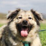 Тая собака из приюта на пристройство, частный приют для бездомных животных Зов Предков zovpredkov.net фото 8