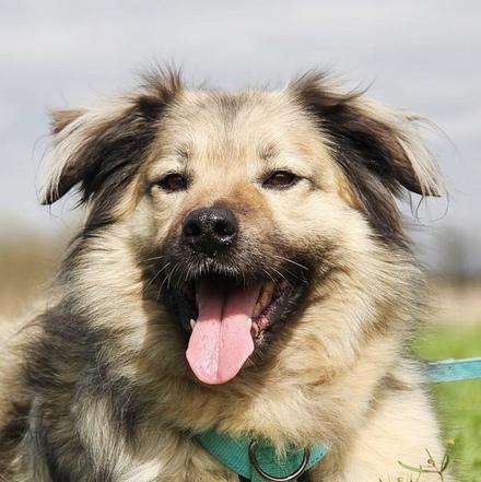 Тая собака из приюта на пристройство частный приют для бездомных животных Зов Предков zovpredkov.net
