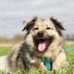 Тая собака из приюта на пристройство, частный приют для бездомных животных Зов Предков zovpredkov.net фото 7