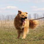 Флинт собака из приюта на пристройство, частный приют для бездомных животных Зов Предков zovpredkov.net фото 1