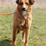 Кэнди собака из приюта на пристройство, частный приют для бездомных животных Зов Предков zovpredkov.net фото 3