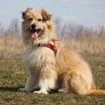 Ирвин собака из приюта на пристройство, частный приют для бездомных животных Зов Предков zovpredkov.net фото 8