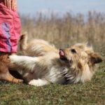 Ирвин собака из приюта на пристройство, частный приют для бездомных животных Зов Предков zovpredkov.net фото 1