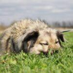 Тая собака из приюта на пристройство, частный приют для бездомных животных Зов Предков zovpredkov.net фото 5