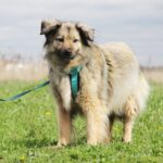 Тая собака из приюта на пристройство, частный приют для бездомных животных Зов Предков zovpredkov.net фото 2
