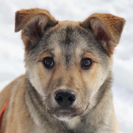 Форест собака из приюта на пристройство, частный приют для бездомных животных Зов Предков zovpredkov.net