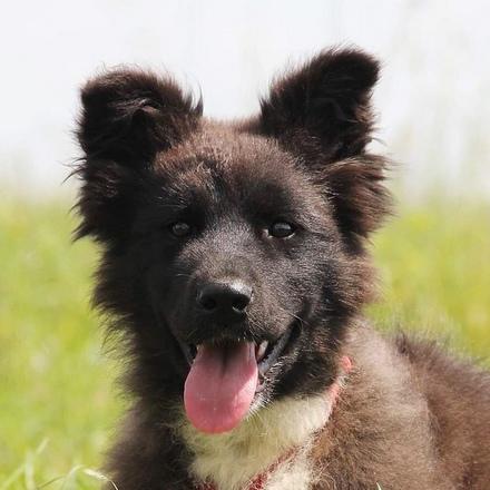 Корсика собака из приюта на пристройство, частный приют для бездомных животных Зов Предков zovpredkov.net