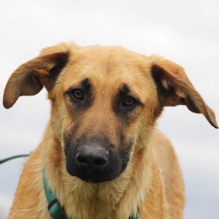 Лунго собака из приюта на пристройство, частный приют для бездомных животных Зов Предков zovpredkov.net