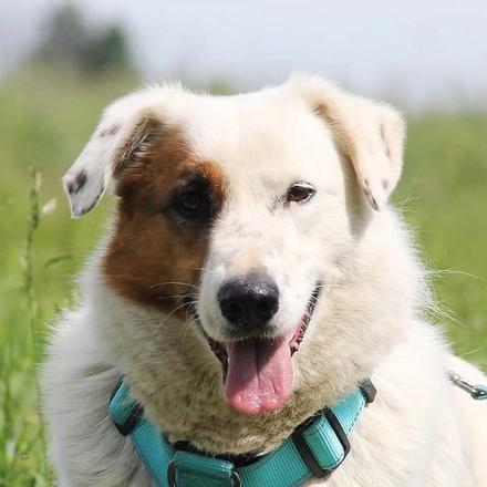 Ромашка собака из приюта на пристройство, частный приют для бездомных животных Зов Предков zovpredkov.net