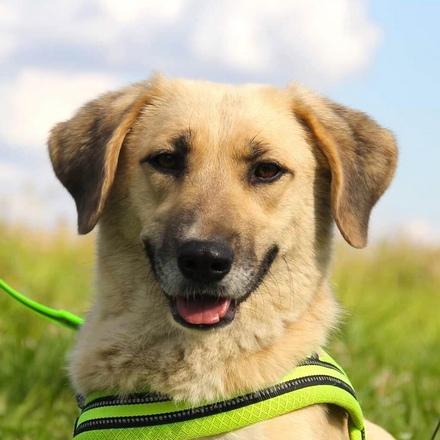 Моцарелла собака из приюта на пристройство, частный приют для бездомных животных Зов Предков zovpredkov.net