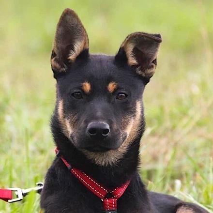 Тучка собака из приюта на пристройство, частный приют для бездомных животных Зов Предков zovpredkov.net