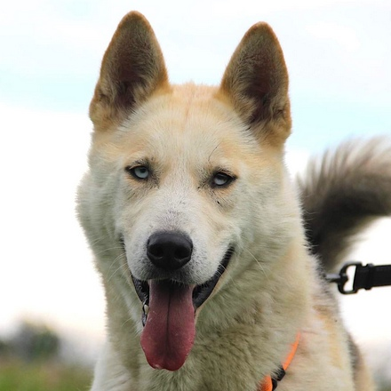 Вереск собака из приюта на пристройство, частный приют для бездомных животных Зов Предков zovpredkov.net