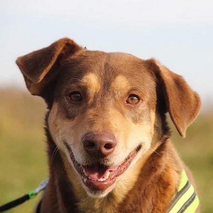 Барри собака из приюта на пристройство, собака ищет дом, частный приют для бездомных животных Зов Предков zovpredkov.net