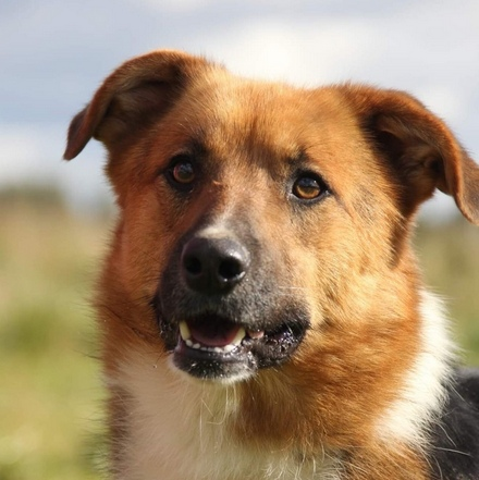 Марсель собака из приюта на пристройство, частный приют для бездомных животных Зов Предков zovpredkov.net