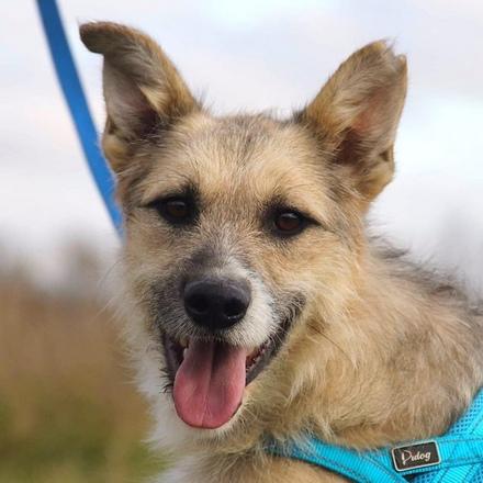 Генри собака из приюта на пристройство, собака ищет дом, частный приют для бездомных животных Зов Предков zovpredkov.net