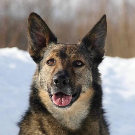 Тина собака из приюта на пристройство собака ищет дом, частный приют для бездомных животных Зов Предков zovpredkov.net
