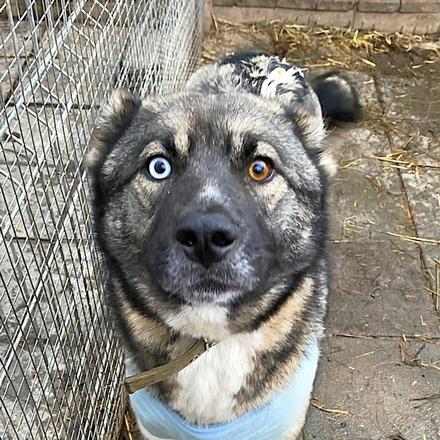Вьюга собака из приюта под опеку