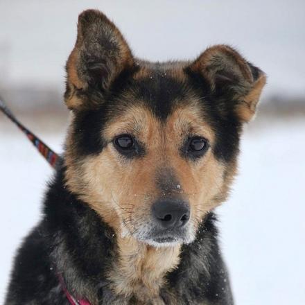 Леди собака из приюта на пристройство, собака ищет дом, частный приют для бездомных животных Зов Предков zovpredkov.net