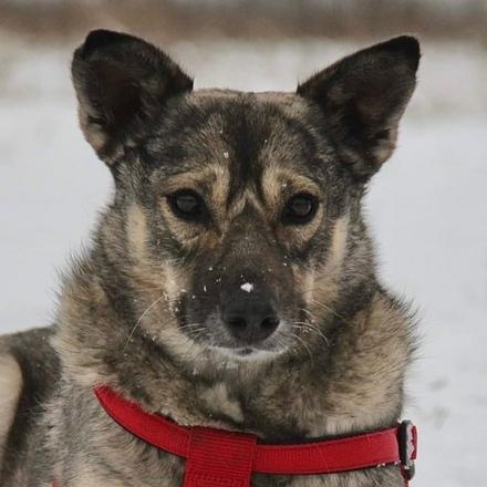 Личи собака из приюта на пристройство, собака ищет дом, частный приют для бездомных животных Зов Предков zovpredkov.net