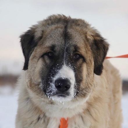 Мишель собака из приюта на пристройство, собака ищет дом, частный приют для бездомных животных Зов Предков zovpredkov.net