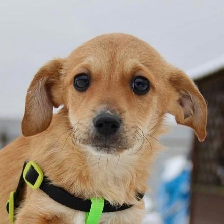Рафаэлла щенок из приюта на пристройство частный приют для бездомных животных Зов Предков zovpredkov.net