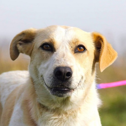 Саммер собака из приюта на пристройство, собака ищет дом, частный приют для бездомных животных Зов Предков zovpredkov.net