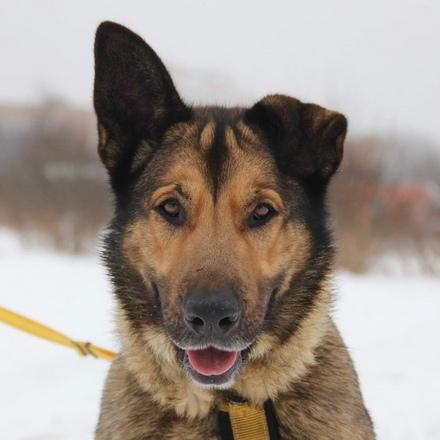 Балу собака из приюта на пристройство, собака ищет дом, частный приют для бездомных животных Зов Предков zovpredkov.net