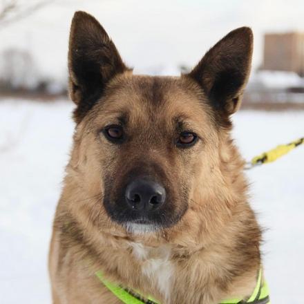 Феликс собака из приюта на пристройство, собака ищет дом, частный приют для бездомных животных Зов Предков zovpredkov.net