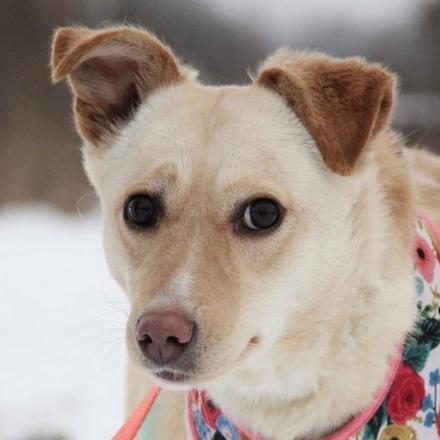 Клёцка собака из приюта на пристройство, собака ищет дом, частный приют для бездомных животных Зов Предков zovpredkov.net