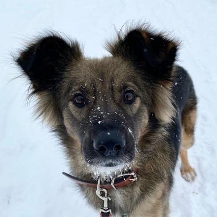 Одри собака из приюта на пристройство, собака ищет дом, частный приют для бездомных животных Зов Предков zovpredkov.net