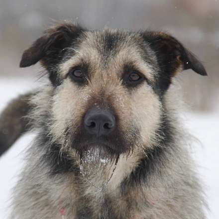 Робин собака из приюта на пристройство, собака ищет дом, частный приют для бездомных животных Зов Предков zovpredkov.net