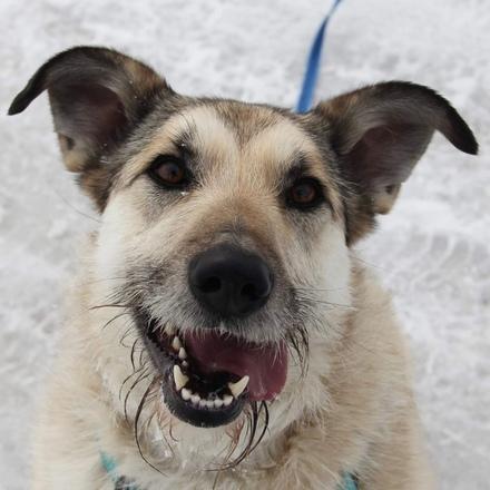 Долька собака из приюта на пристройство, собака ищет дом, частный приют для бездомных животных Зов Предков zovpredkov.net