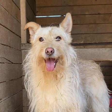 Сьюзи собака из приюта под опеку