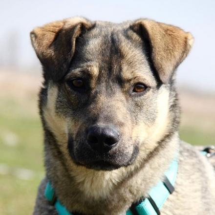 Бавария собака из приюта на пристройство собака ищет дом, частный приют для бездомных животных Зов Предков zovpredkov.net