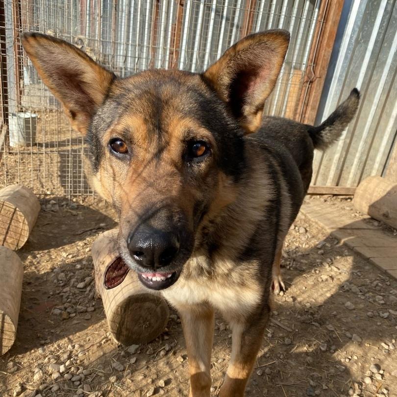 Вудсток собака из приюта под опеку частный приют для бездомных животных Зов Предков zovpredkov.net
