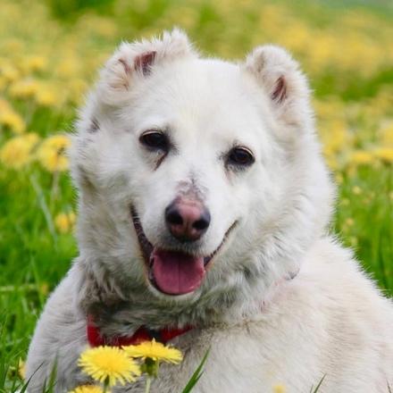 Лиана собака из приюта на пристройство, собака ищет дом, частный приют для бездомных животных Зов Предков zovpredkov.net