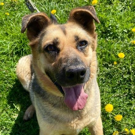 Мила собака из приюта на пристройство, собака ищет дом, частный приют для бездомных животных Зов Предков zovpredkov.net