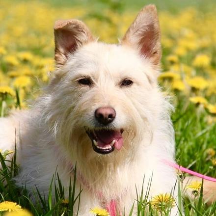 Сьюзи собака из приюта на пристройство, собака ищет дом, частный приют для бездомных животных Зов Предков zovpredkov.net