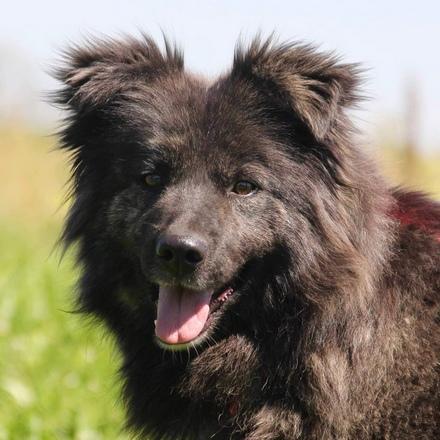 Руна собака из приюта на пристройство, собака ищет дом, частный приют для бездомных животных Зов Предков zovpredkov.net